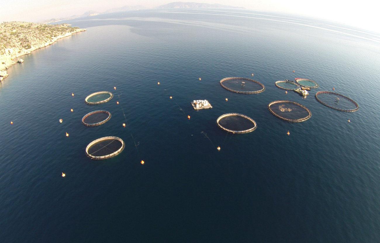 Κλουβιά στη θάλασσα όπου εκτρέφονται ψάρια σε μονάδα ιχθυοκαλλιέργειας