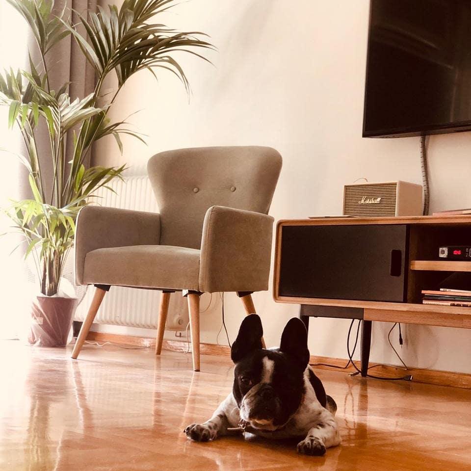 Πολυθρόνα στο σπίτι της Ιωάννας Μαλέσκου
