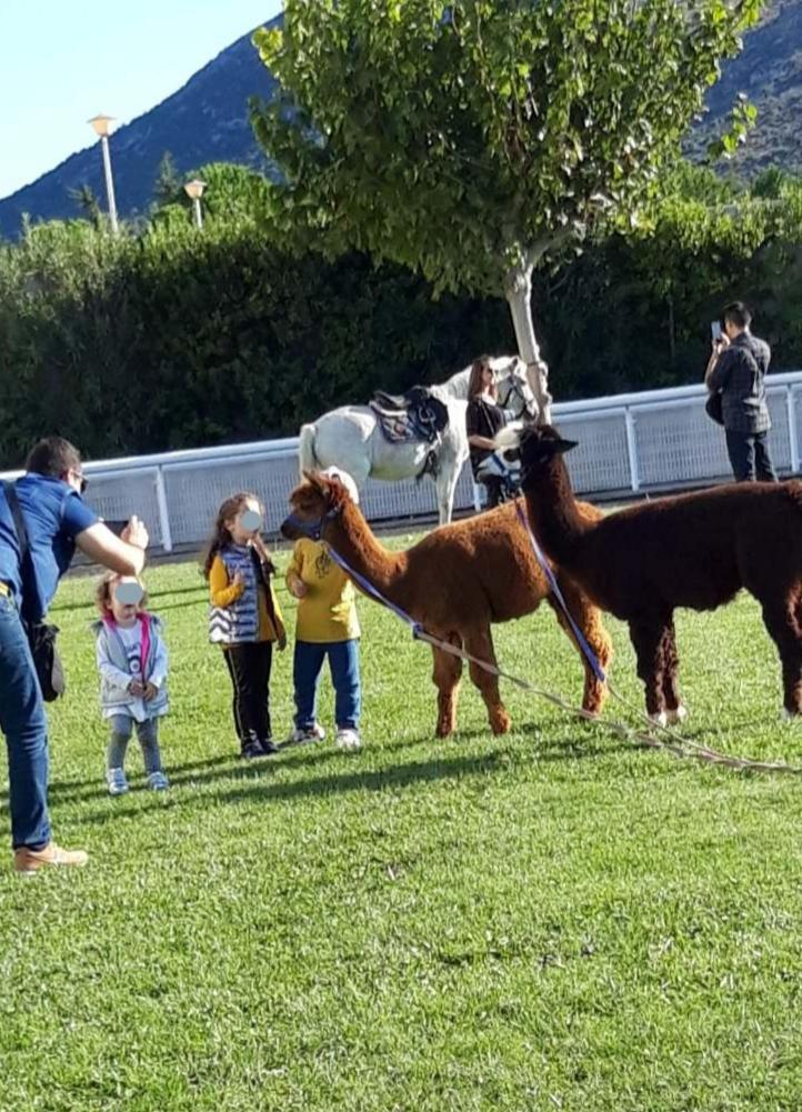 Τα παιδιά παίζουν με τα alpaca στο Markopoulo Park