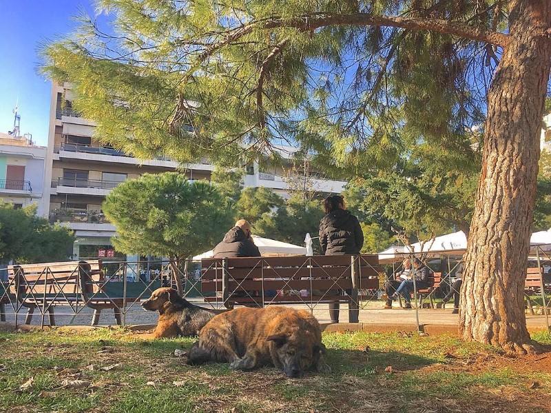Σκυλιά ξαπλωμένα σε πάρκο