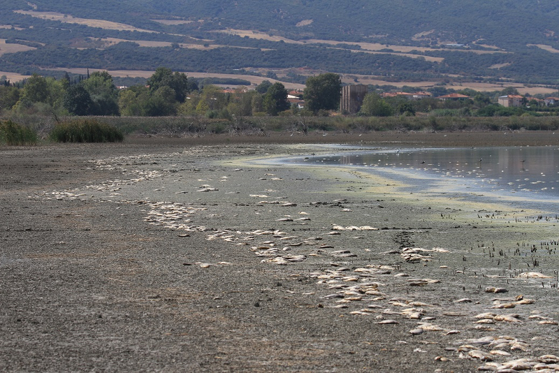 Νεκρά ψάρια στη λίμνη Κορώνεια