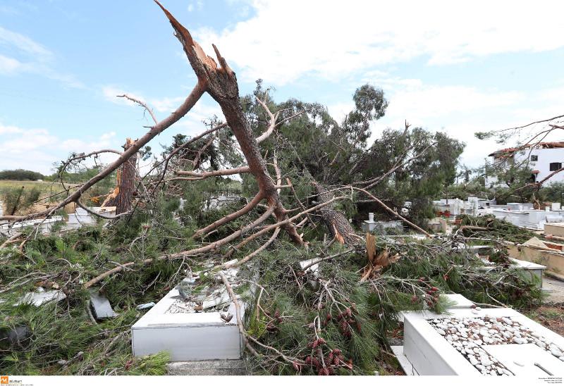 Ολα τα δένδρα του νεκροταφείου ξεριζώθηκαν από την θεομηνία
