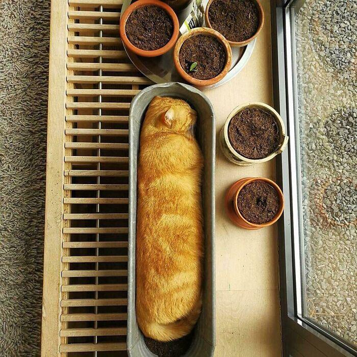 Μπακέτα ψωμί πλάι σε μπολ με πραλίνα φουντουκιού