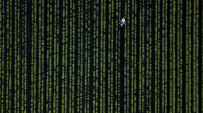ofthalmapati matrix othoni agros