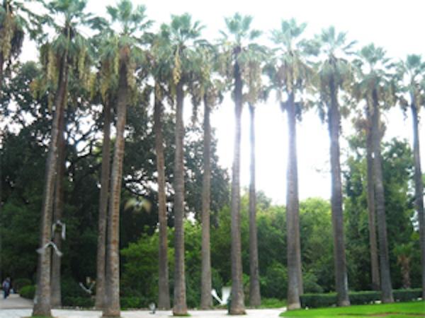 Ουασιγκτόνιες στον Εθνικό Κήπο