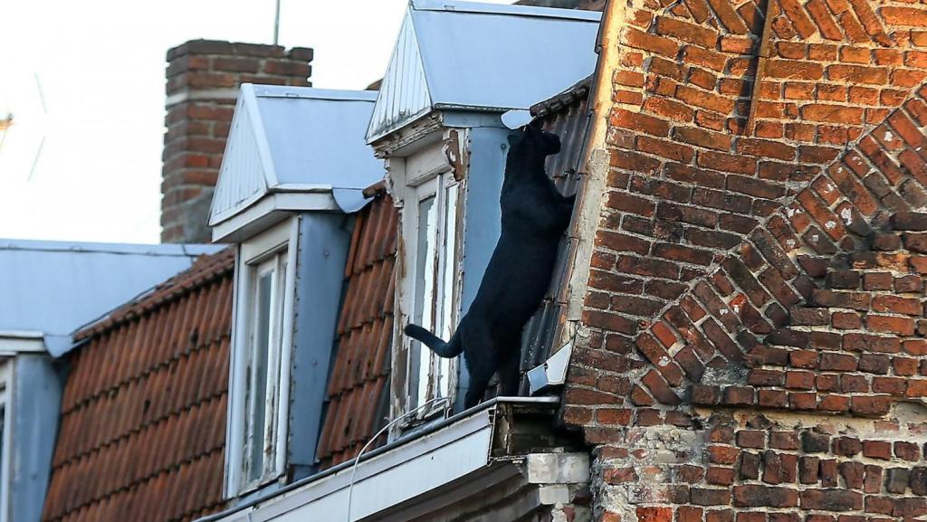 Ένας μαύρος πάνθηρας στην ταράτσα οροφής σπιτιού