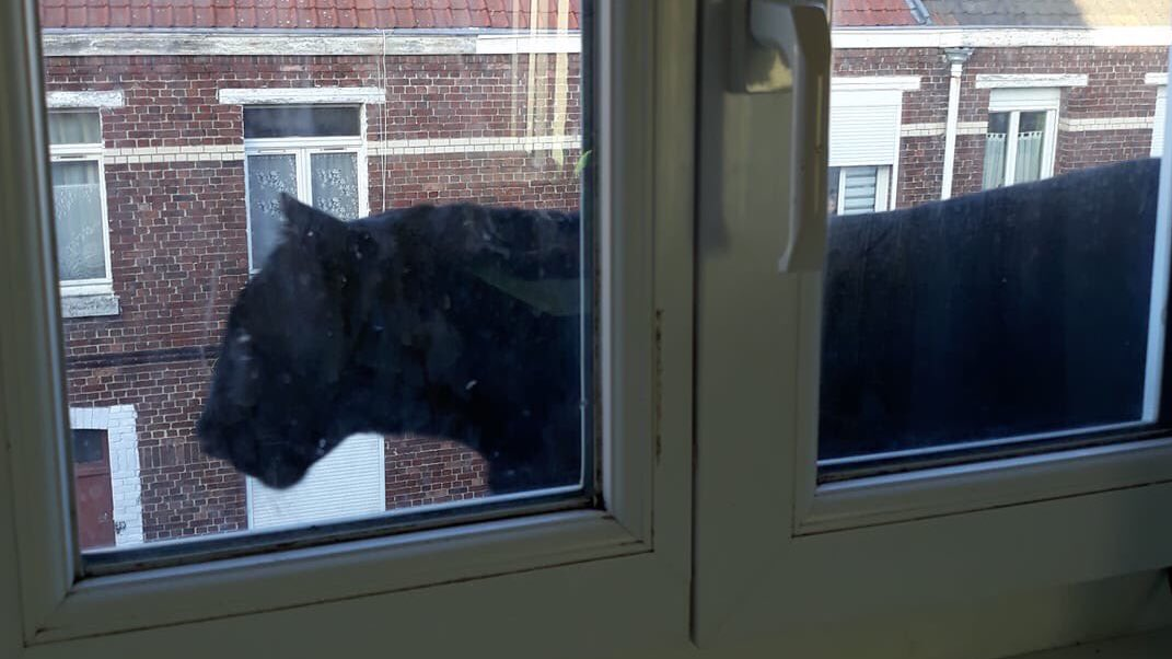 Μαύρος πάνθηρας έξω από το παράθυρο σπιτιού