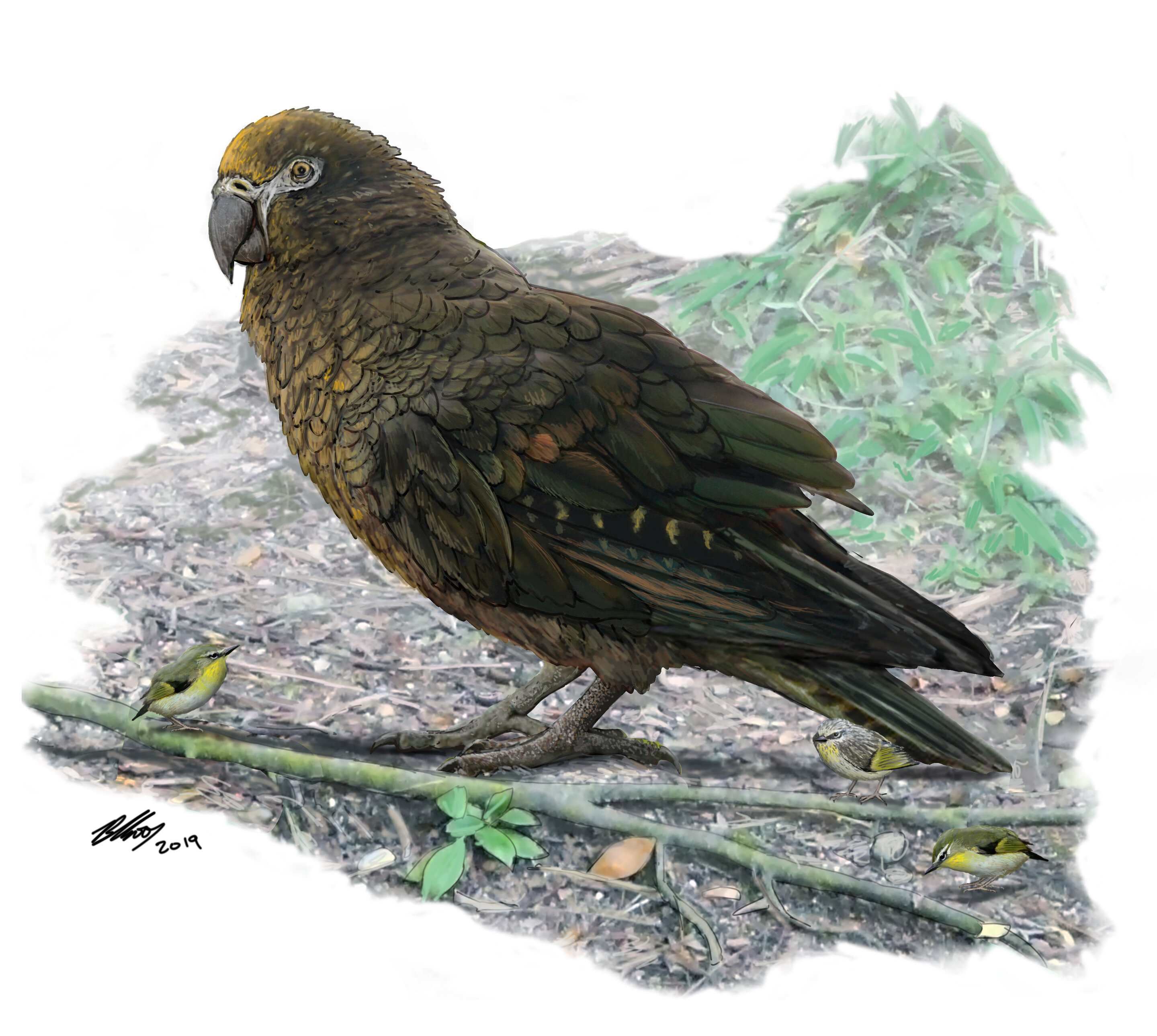 Ο παπαγάλος «Ηρακλής»