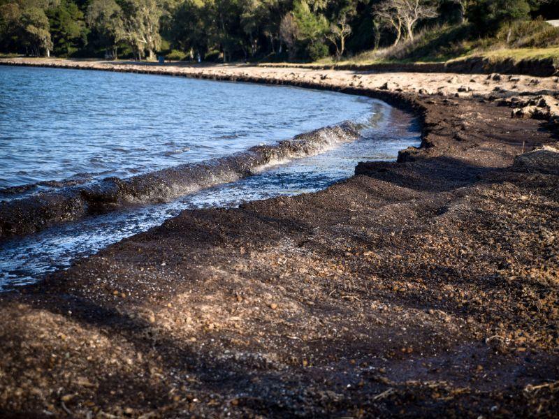Ολη η παραλία στην Πρέβεζα καλύφθηκε από φύκια