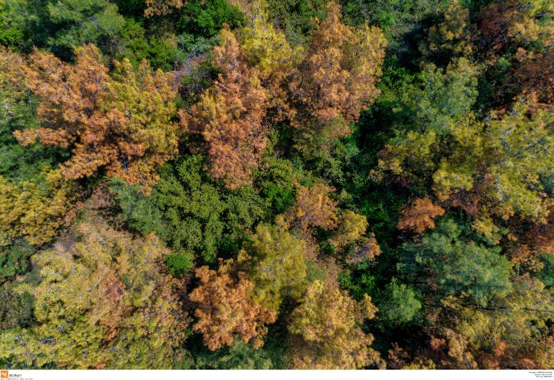 Τεράστια η καταστροφή στο δάσος του Σέιχ Σού