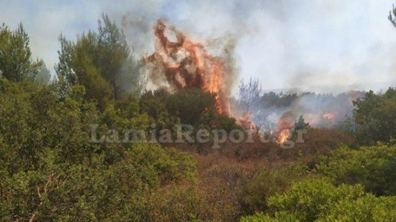 Φωτογραφία από την πυρκαγιά στο Μαρτίνο