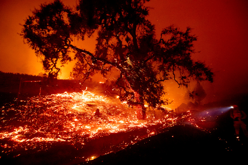 Καμμένα δέντρα από την φωτιά στην Καλιφόρνια