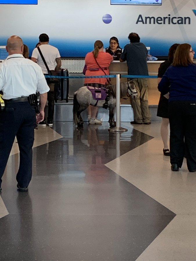 Πόνι σε αεροδρόμιο