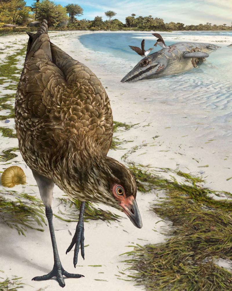 Το αρχαιότερο πουλί σε καλλιτεχνική απεικόνιση