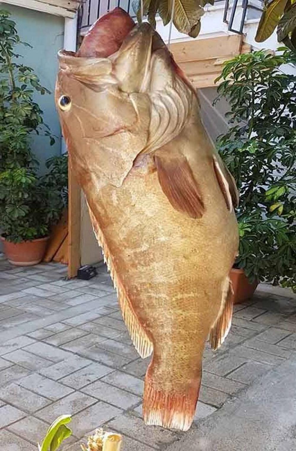 Ψάρι γιγας