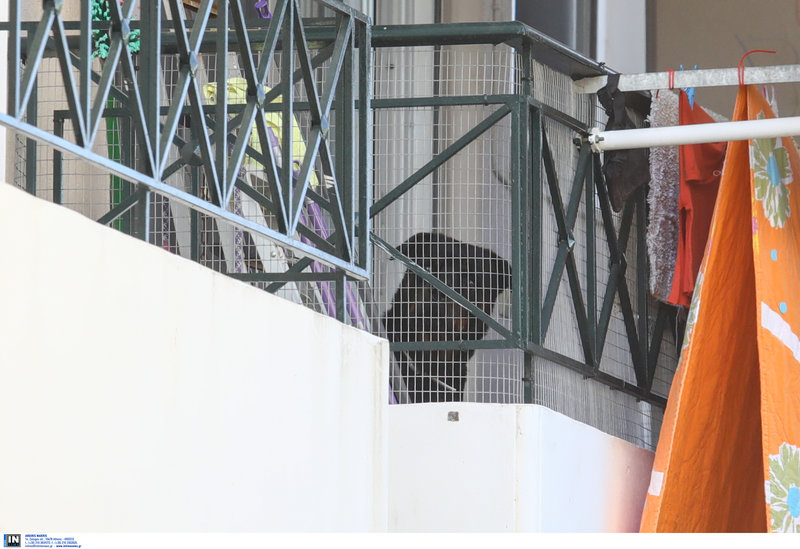Το ροτβάιλερ σύμφωνα με πληροφορίες επιτέθηκε στο δύο μηνών κοριτσάκι