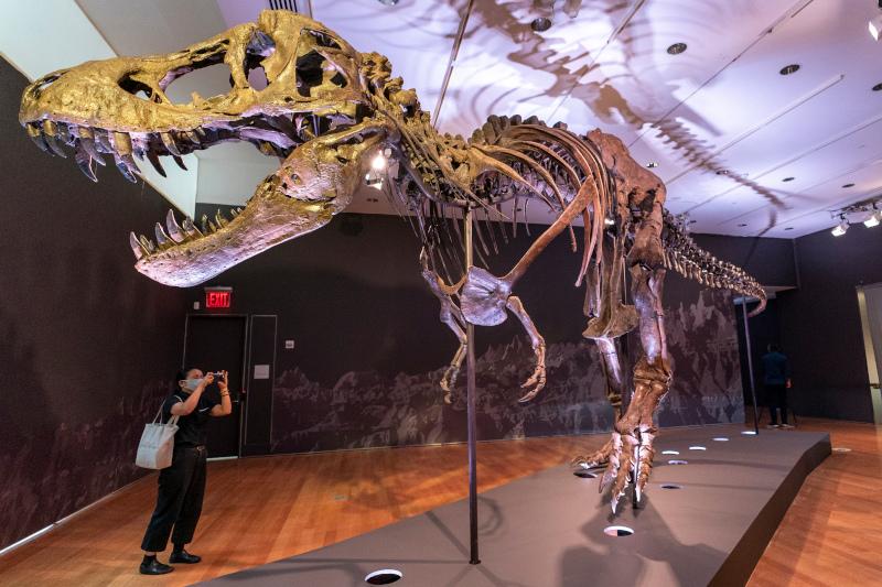 γυναίκα βγάζει φωτογραφία τον σκελετό του τυραννόσαυρου Σταν
