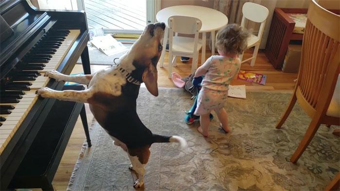 Σκύλος παίζει πιάνο και τραγουδά και ένα μικρό παιδί χορεύει