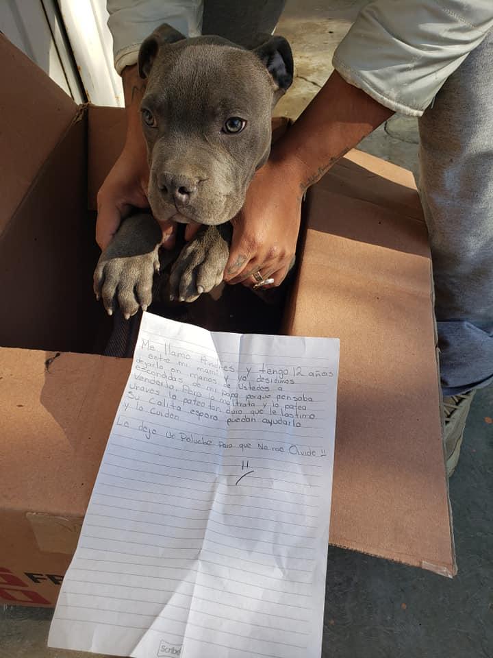 Το γράμμα που άφησε ο 12χρονος στην χαρτοκούτα μαζί με τον σκύλο του
