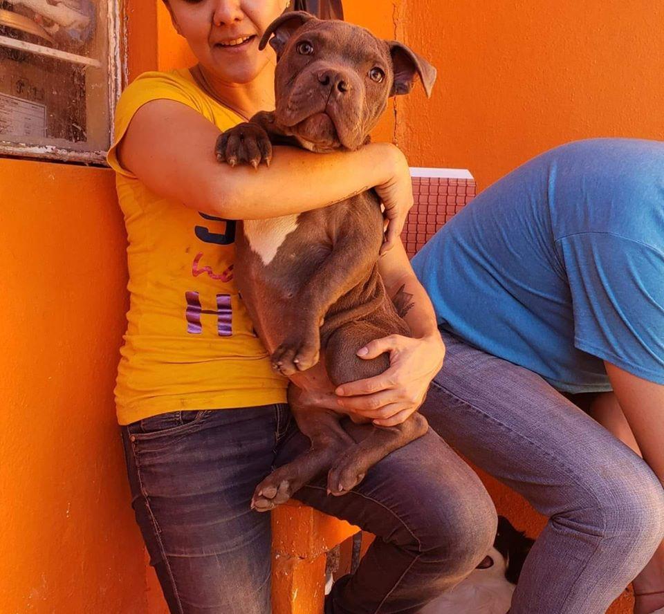 Ο σκύλος ονομάζεται πλέον Ρενέ και αναζητά νέα οικογένεια