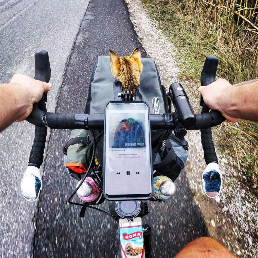 Τιμόνι ποδηλάτου, χέρια ποδηλάτη και γάτα μέσα σε τσάντα