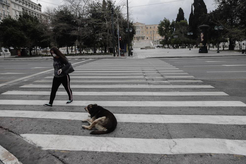 Σκυλί κάθετε πάνω στον δρόμο στην Αθήνα