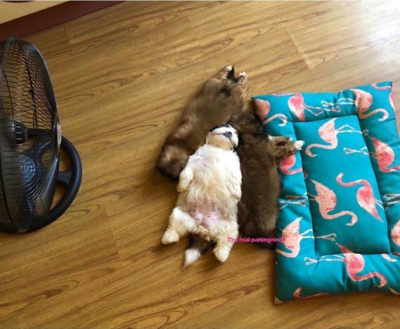 Τρία κουτάβια κοιμούνται