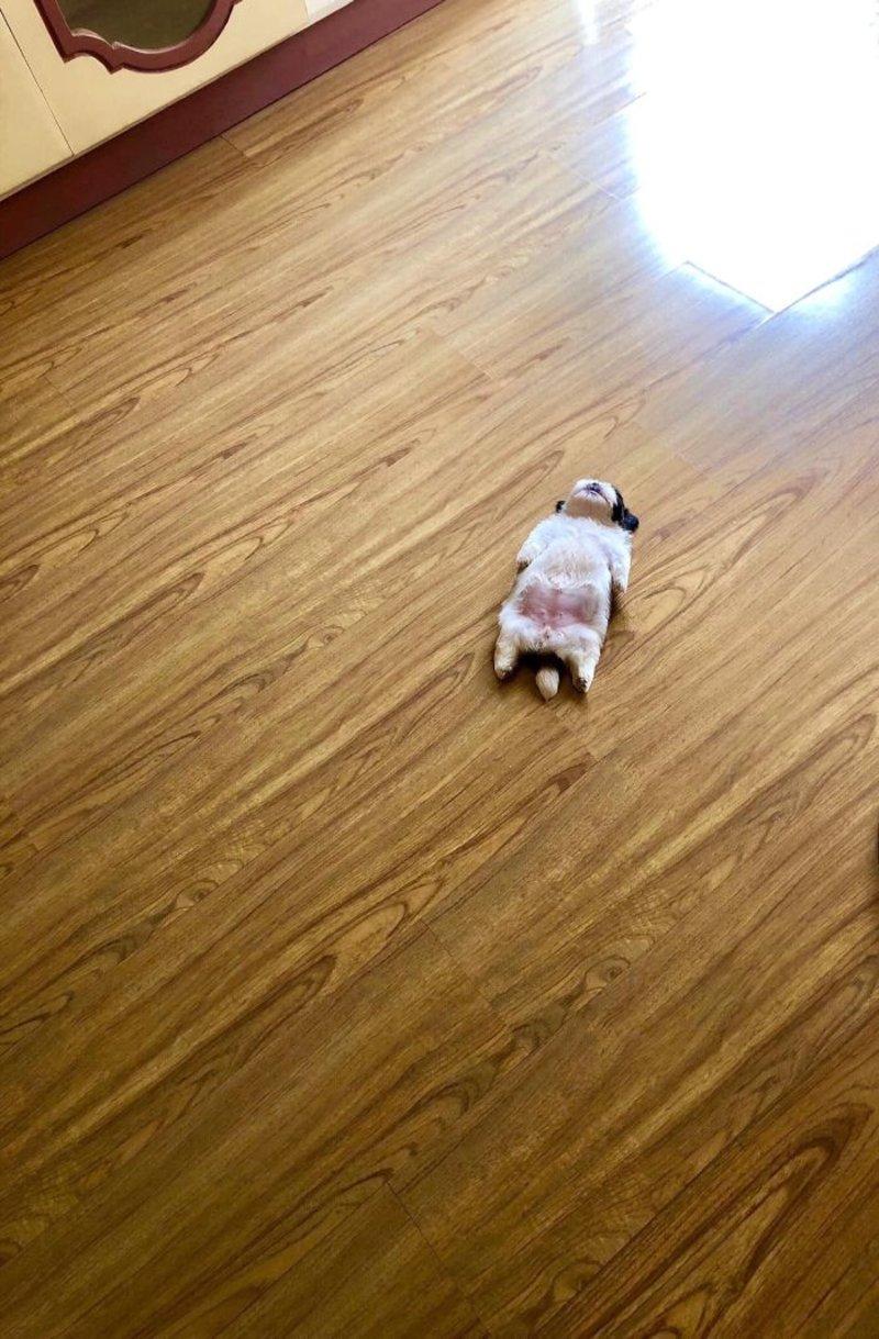 Ενα κουτάβι κοιμάται στο πάτωμα