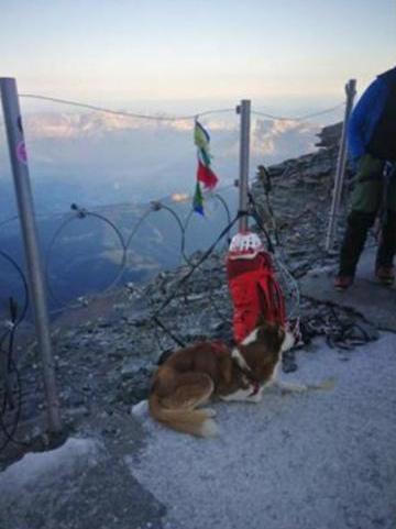 Σκύλος στο Mont Blanc