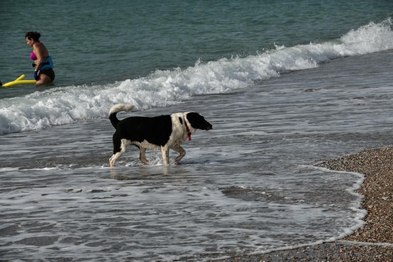 σκύλος σε παραλία