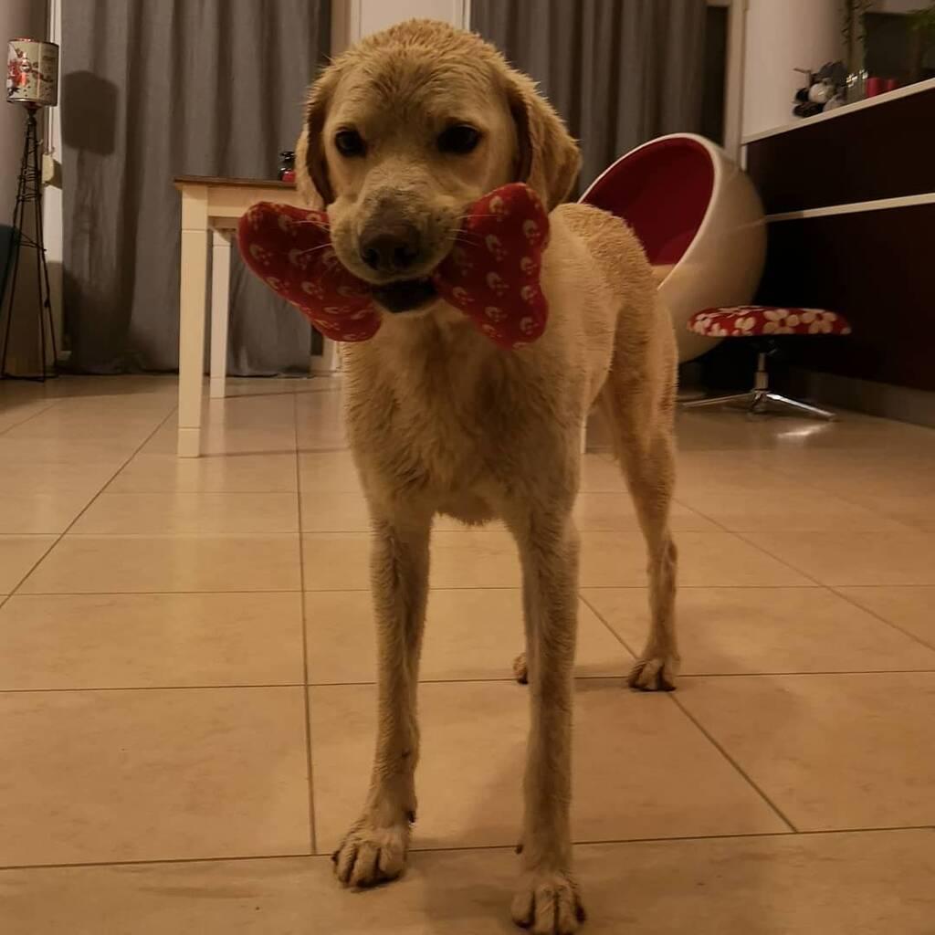 Ο σκύλος του Λεωνίδα Κουτσόπουλου στο σπίτι του