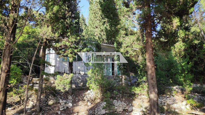 Σπίτι ανάμεσα στα δέντρα στη Νήσο Σπάρτη
