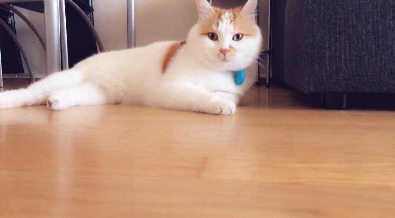 γατα με χάντρα