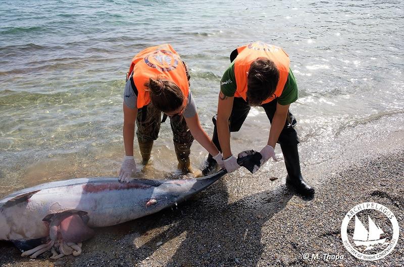 Δελφίνι που ξεβράστηκε σε ακτή