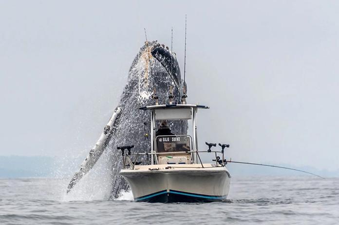 Μια φάλαινα κάνει άλμα δίπλα σε έναν ανυποψίαστο ψαρά