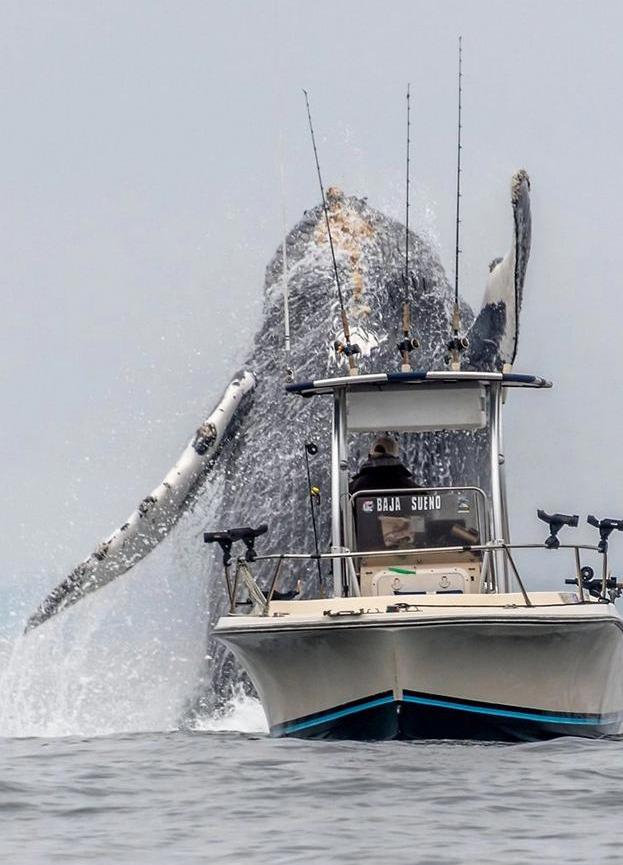 ΚΟντινό πλάνο φάλαινας και μικρού σκάφους