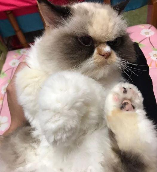 H Meow Meow μπορεί να δείχνει μονίμως κατσουφιασμένη, ωστόσο, είναι αξιολάτρευτη, όπως λέει η ιδιοκτήτριά της