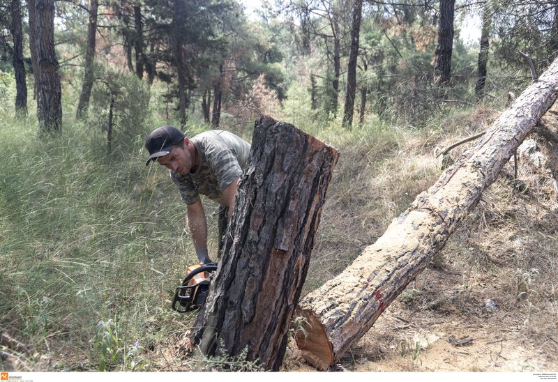 Ξεκίνησε η υλοτόμηση δέντρων στο δάσος του Σέιχ Σου