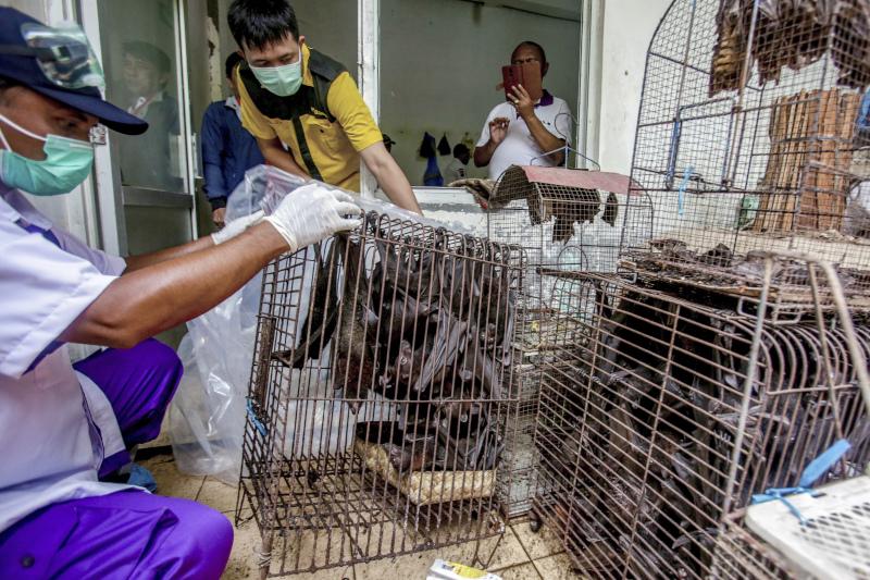 Υπάλληλοι υγειονομικής υπηρεσίας ελέγχουν νυχτερίδες