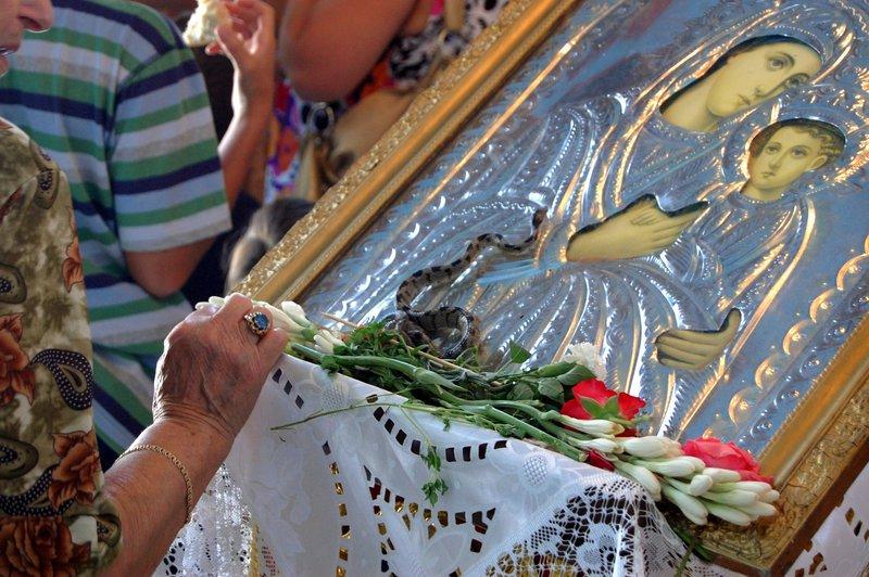 Εμφανίστηκαν και φέτος τα φιδάκια της Παναγίας στην Κεφαλονιά [εικόνες] |  ΕΛΛΑΔΑ | iefimerida.gr