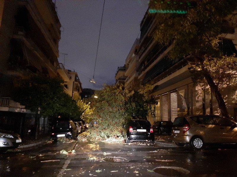 καταιγίδα πεσμένο δέντρο στους Αμπελόκηπους